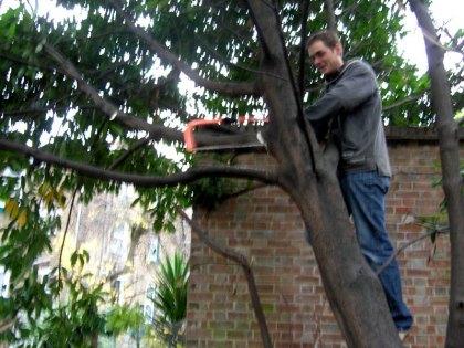 Austen up the laurel tree
