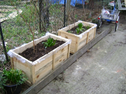 container gardening using pottery packing crates