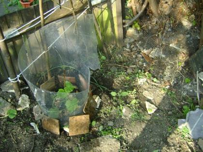 Anti slug defences (Part 2)