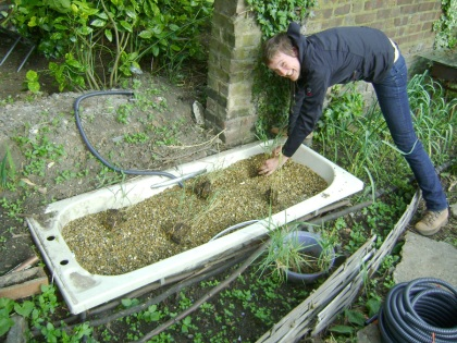 Morgan planting reeds into the gravel-filled bath tub