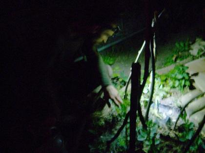 Midnight slug and snail run with a headtorch