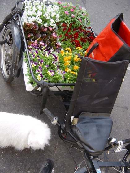 Brox filled with flowers from Columbia Road flower market