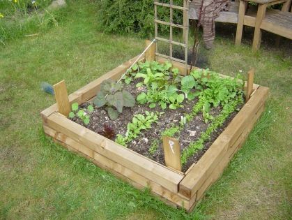 Close up on raised bed - note the twigs and trellis at the back for the peas to grow up