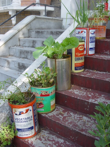 growing salad in oil cans or drums